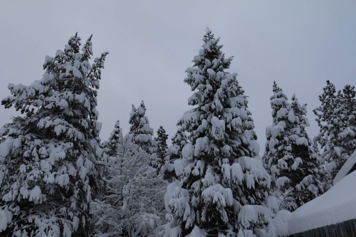 Tree snow load