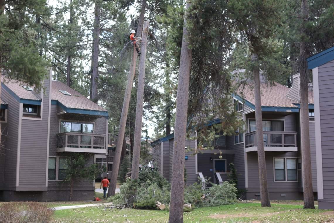 Man-in-tree